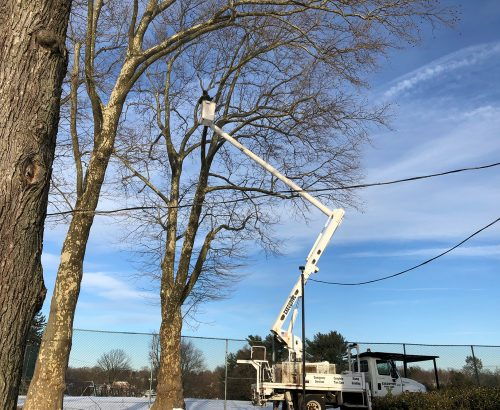 Executive Tree Care: McCall Golf Course Tree Care Project